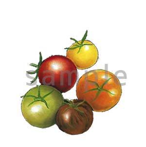 チョークアートイラスト トマト5