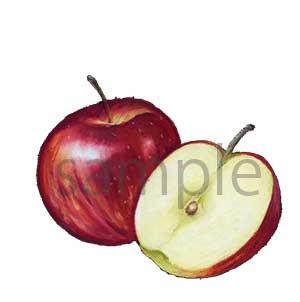 チョークアートイラスト りんご
