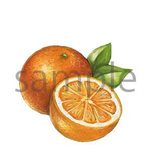 チョークアートイラスト オレンジ