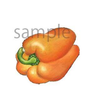 チョークアートイラスト パプリカ(オレンジ)