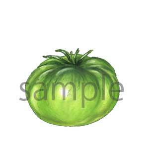 チョークアートイラスト グリーントマト