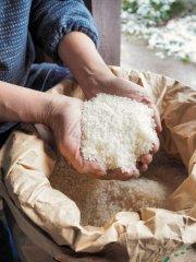 【宮田米(みやだまい)】飛騨高山の野村農園で採れたコシヒカリ!農薬を使用せず有機肥料のみで作っています
