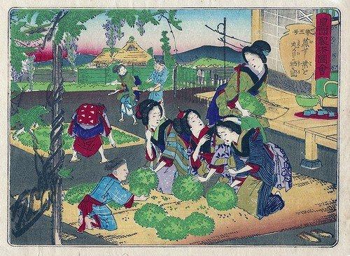 皇国製茶図会 第5号「蒸せし葉を...