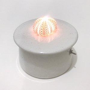川村忠晴 陶器のライト ウニ 02