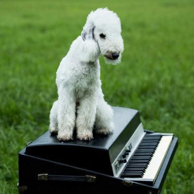 "ayU tokiO 『犬にしても (+4曲入りCD)』 (7""EP+CD/JPN/ POP, ROCK)"