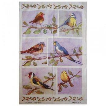 【McCAW ALLAN】Cotton Tea Towel:GARDEN BIRDS<br>エマボール コットン ティータオル:ガーデンバーズ