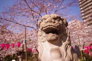 土佐稲荷神社にてお花見。