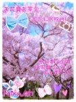 お花見お茶会(2015/4/29)