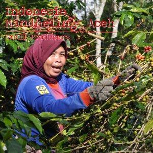 00-インドネシア スマトラ島 マンデリンG1 トリプルピック(深煎り)