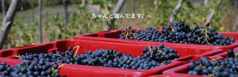 イタリアワイン通販[にしのよしたか]大阪のイタリア専門ワイン販売