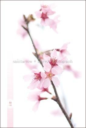 No.52 【初心】 ポストカード