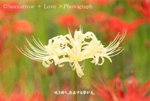 No.2 【自己愛の回復】 ポストカード