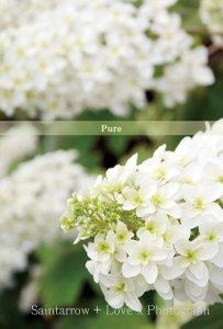 No.25 【Pure】 ポストカード