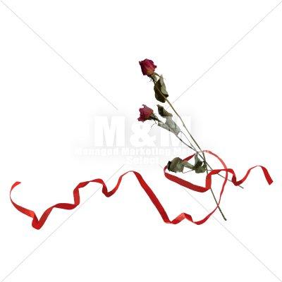 イラスト素材 花 ドライフラワー バラと赤いリボン 1 M M Collection