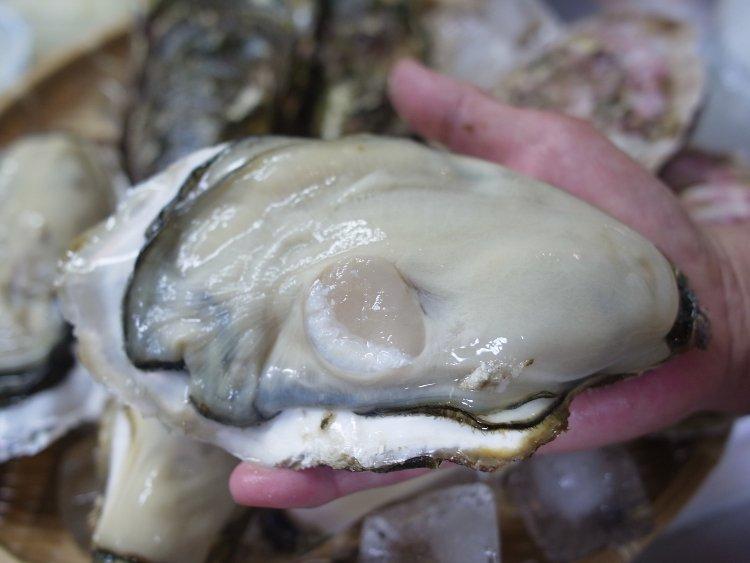 【三陸・山田町】中村さんの大粒殻つき牡蠣