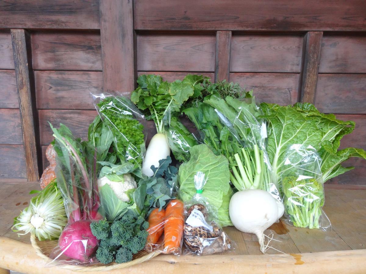 【旬の京野菜・だん弥】収穫したその日に出荷!おまかせAセット(農薬・化学肥料 不使用)