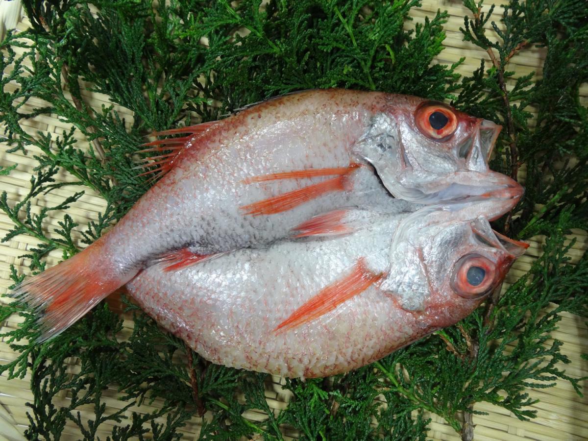 【京魚・三央】のどぐろの干物