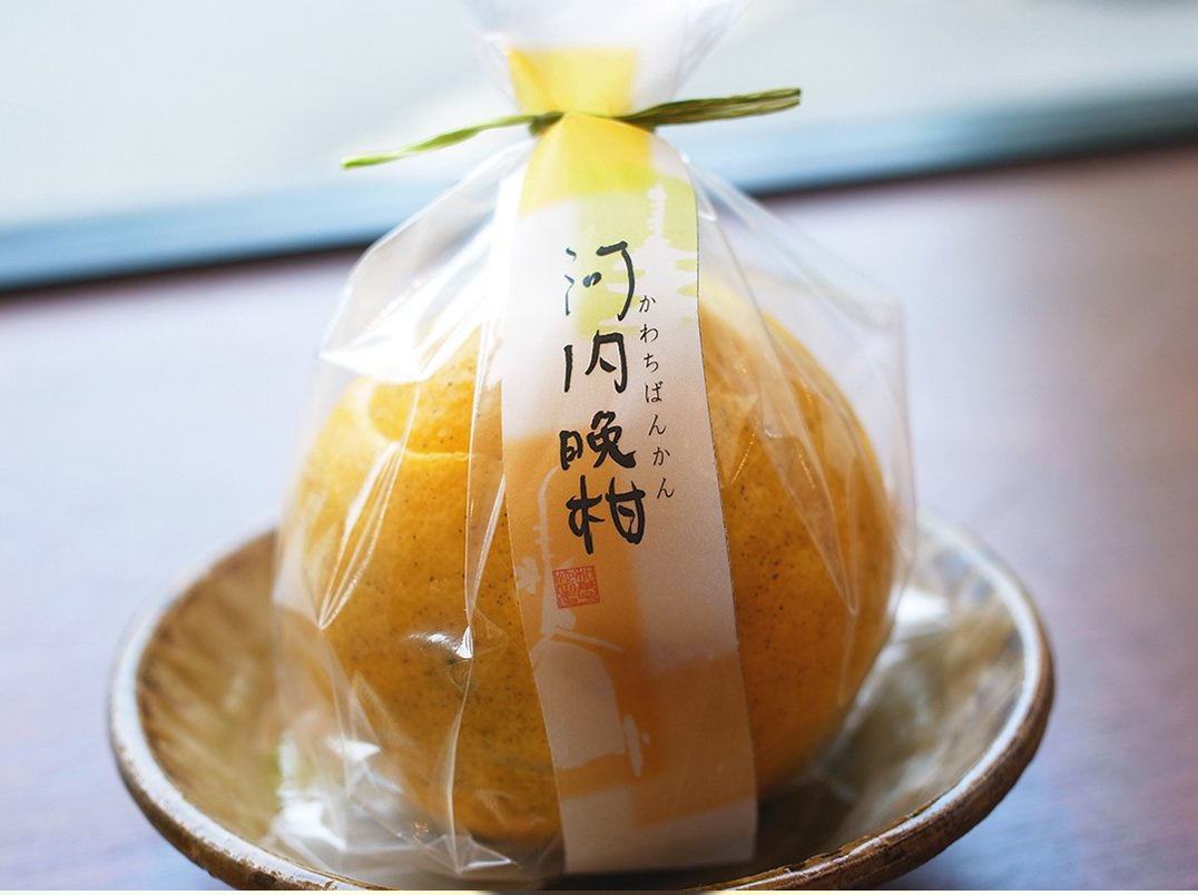 【いけだ】河内晩羹(かわちばんかん)ぜりー(化粧箱入り)