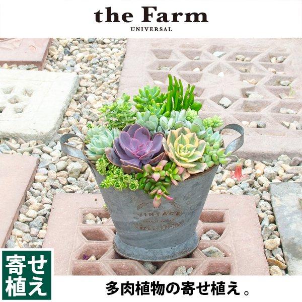 植物 植え 多肉 寄せ