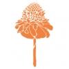 フラダンス用品 色で選びたい オレンジ