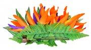 オレンジ アレンジ ヘアクリップ KC-014 バードオブパラダイス