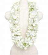 ホワイト(白) Eプルメリアレイ ホワイト ふちグリーン