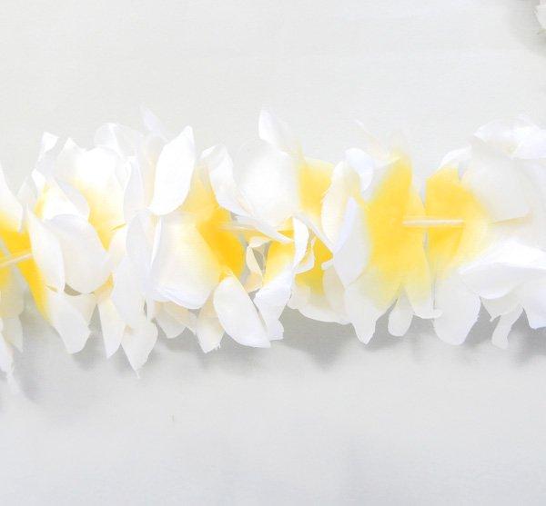 カフナレイ 白黄 【画像2】