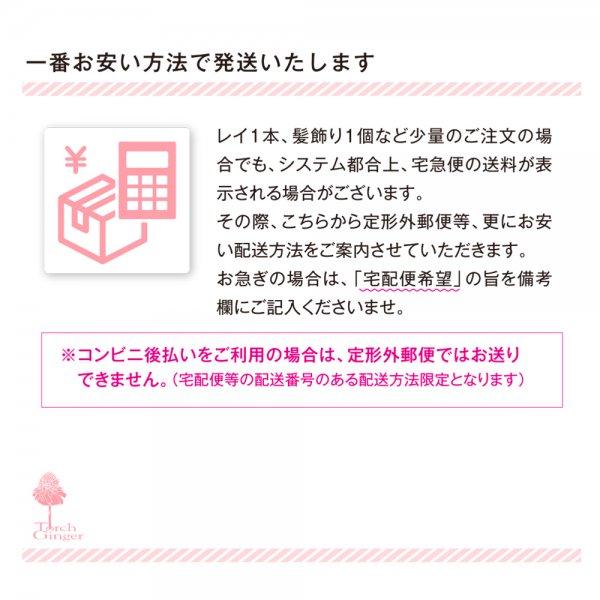 アロハプルメリアシングルレイ 白黄【画像7】