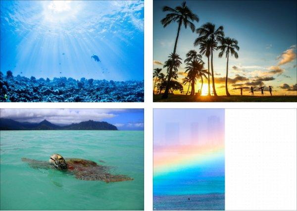 2021 ハワイ手帳 ミニサイズ TUTUVIバージョン レフアタパ レッド(リバーシブル表紙 ファーン)【画像5】