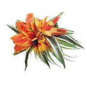ヘアクリップ(髪飾り) アレンジ ヘアクリップ KC-LA-2 ハワイ島別シリーズ ラナイ島 オレンジ