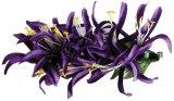 パープル(紫) スパイダーリリーM ヘアクリップ パープル