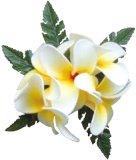 ホワイト(白) コロヘ5フラワーズプルメリア ラージ  ヘアクリップ