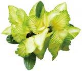 グリーン(緑) ニューオーキッドクリップ グリーン