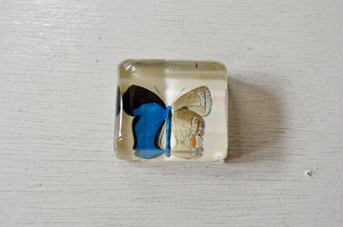 ペーパーウェイト 蝶