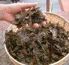 【世界に誇る幻の後発酵茶】清水さんの無農薬 阿波番茶 100g