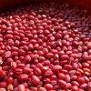 【放射能検査済 検出限界1ベクレル/kgで不検出】北海道産無農薬小豆 500g