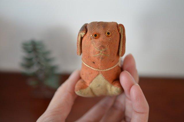 犬のピンクッション