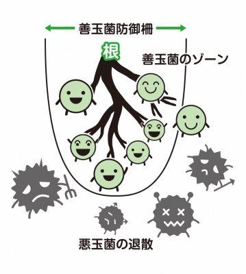 肥料ガッテン菌力ペレット