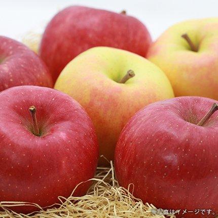 産地直送!新鮮な青森県産りんご 混合 ミックス品種[15kg] の通信販売・ネット販売