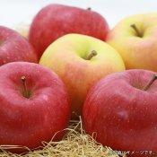 産地直送!新鮮な青森県産りんご 混合 ミックス品種[15kg]をお取り寄せ