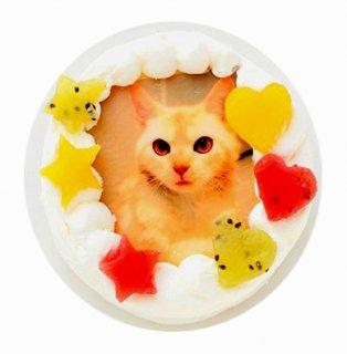 ニャンコ写真ケーキ【3号 9cm】ねこ用