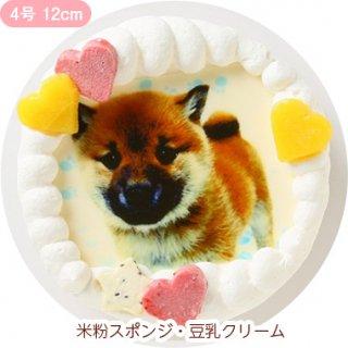 ワンコ写真ケーキ【4号 12cm】小型犬用