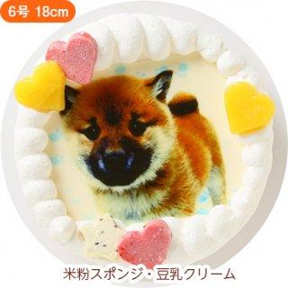 ワンコ写真ケーキ【6号 18cm】大型犬用