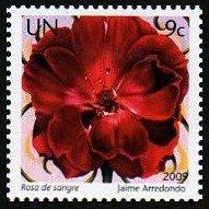 (国連)きれいな花�