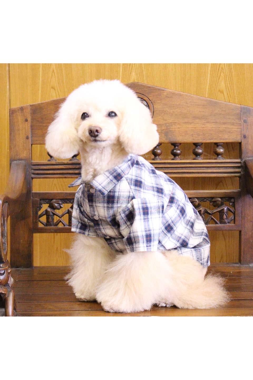 CaliforniaCactusDogShirtsカリフォルニア・ドッグシャツ大人カジュアルに最適な海外ファッションのothers(その他インポートアイテム)のドッググッズや。アメカジテイストのワンちゃん用チェックシャツ。洗いざらしのシワも気にならないカジュアルなチェックシャツ。/main-24