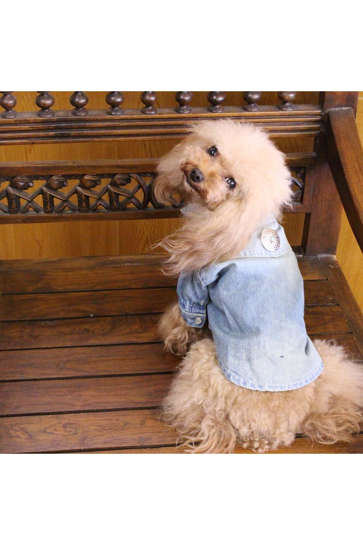 CaliforniaCactusDogDenimShirtsカリフォルニア・ドッグデニムシャツ大人カジュアルに最適な海外ファッションのothers(その他インポートアイテム)のドッググッズや。本格的な作りのデニム・ウエスタンシャツ。胸のヨークもパールのスナップボタンも人のシャツ顔負けのディテールです。/main-27
