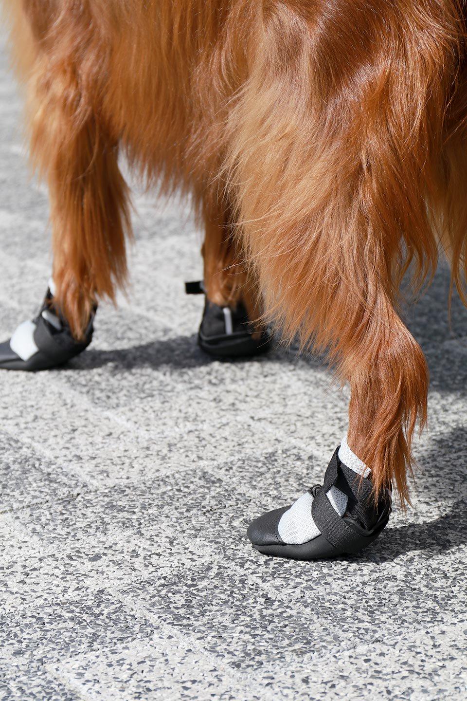 UltraPawsのUltraCoolDogBootsウルトラクール・ドッグブーツ/UltraPaws(ウルトラパウズ)のドッググッズやその他。灼熱のアスファルトからワンちゃんの足を守る夏用ドッグシューズ。ウルトラパウズのドッグブーツの中でも評価が高い夏用アイテムです。/main-8